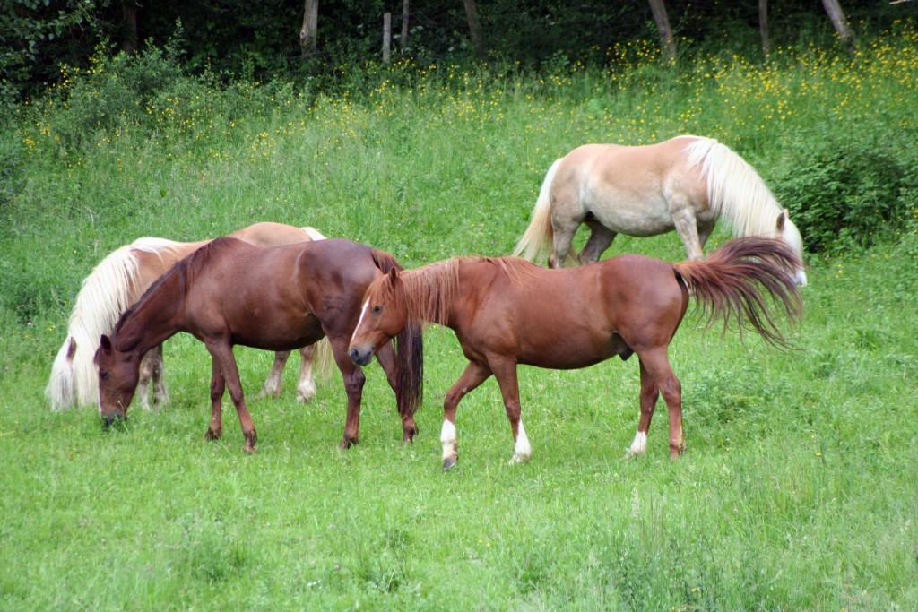 pferden reiten le colombié