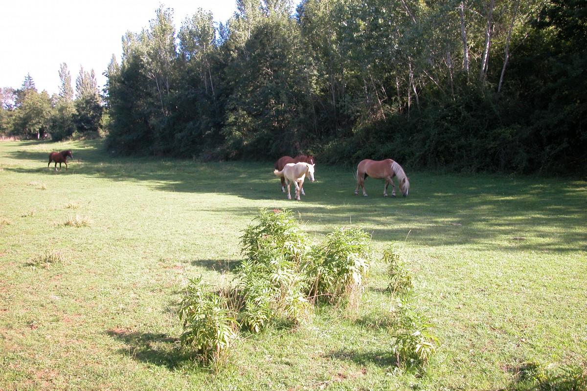 Le Colombié Pferden