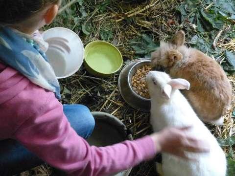 Enfant-lapin